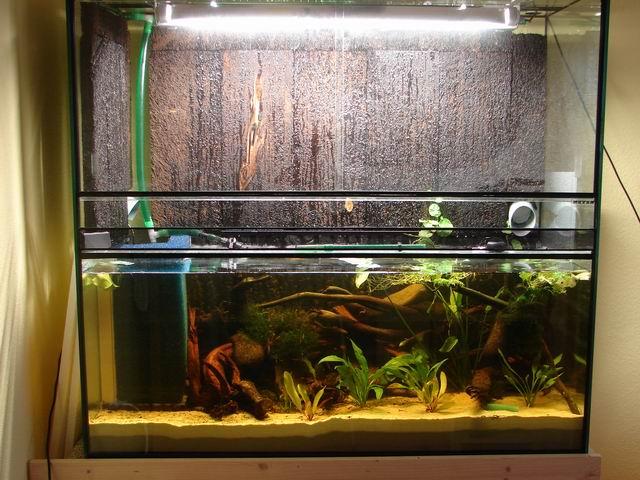 aquarium wasser gelblich